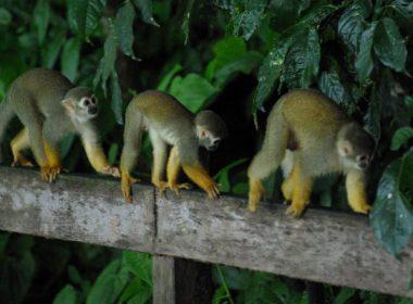 ilet-la-mere-singes-2-600