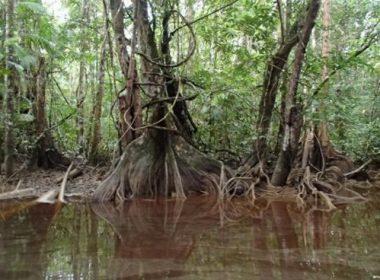 Les Marais de Kaw à bord du Morpho