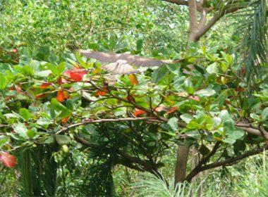 L'inselberg Savane-roche Virginie